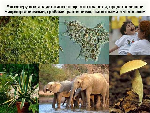 Биосферу составляет живое вещество планеты, представленное микроорганизмами,...