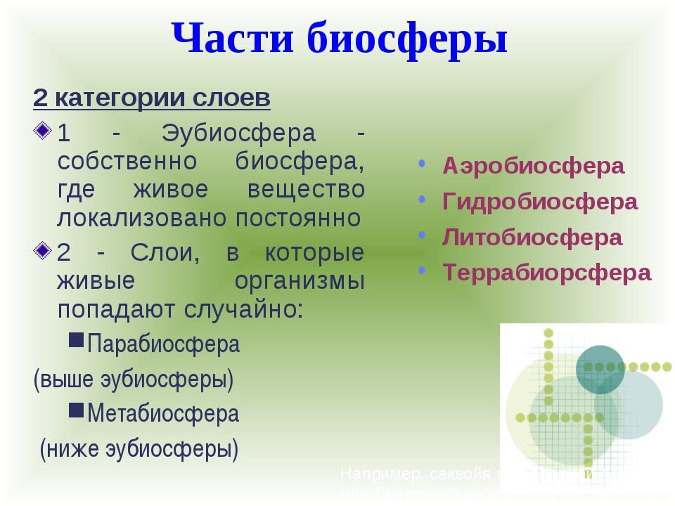 Части биосферы Например, секвойя из Северной Америки или Драконово дерево с К...