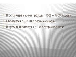 В сутки через почки проходит 1500 – 1700 л крови Образуется 150-170 л первич