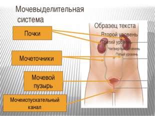 Мочевыделительная система Почки Мочеточники Мочевой пузырь Мочеиспускательный