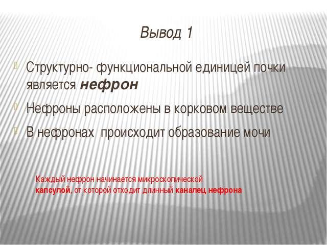 Вывод 1 Структурно- функциональной единицей почки является нефрон Нефроны рас...