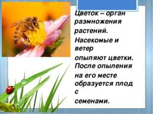 Цветок – орган размножения растений. Насекомые и ветер опыляют цветки. После