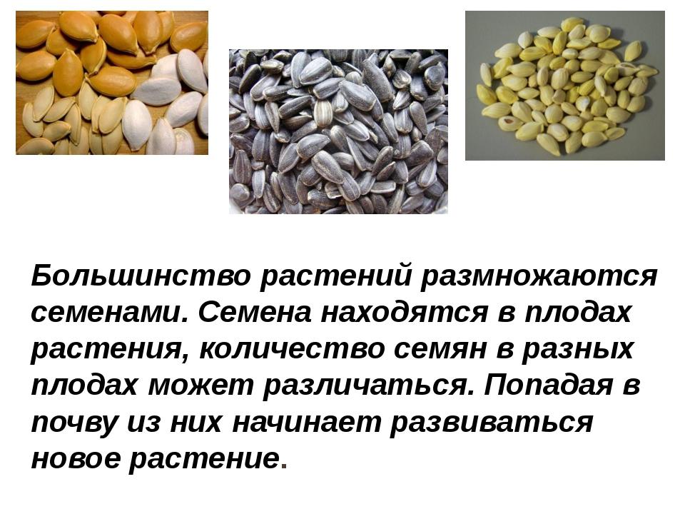 Большинство растений размножаются семенами. Семена находятся в плодах растени...