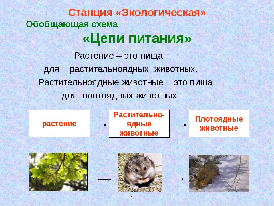 Станция «Экологическая» Обобщающая схема «Цепи питания» Растение – это пища д...
