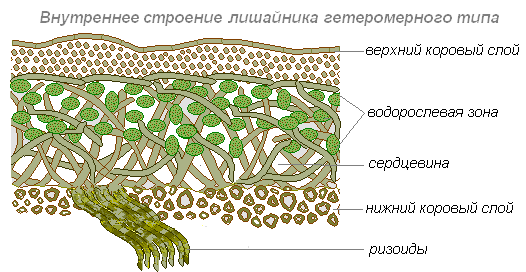 http://biouroki.ru/content/page/687/3.png
