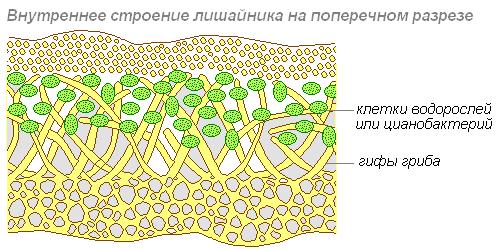 http://biouroki.ru/content/page/687/2.png