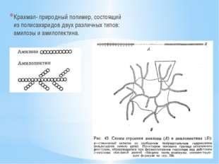 Крахмал- природный полимер, состоящий из полисахаридов двух различных типов: