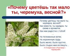 «Почему цветёшь так мало ты, черемуха, весной?» Почему цветешь так мало ты, ч