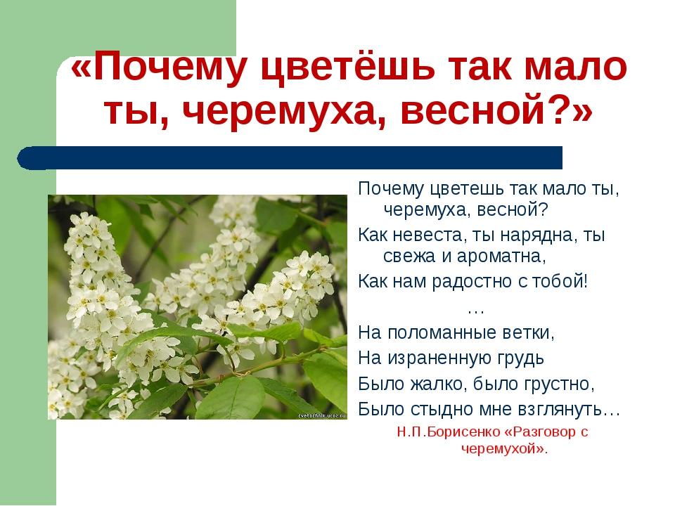 «Почему цветёшь так мало ты, черемуха, весной?» Почему цветешь так мало ты, ч...