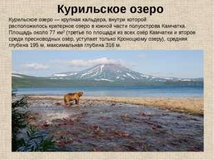 Курильское озеро— крупнаякальдера, внутри которой расположилоськратерное о