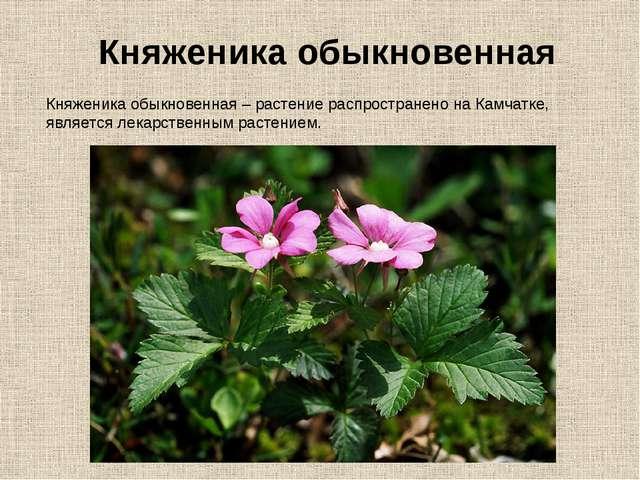 Княженика обыкновенная – растение распространено на Камчатке, является лекарс...