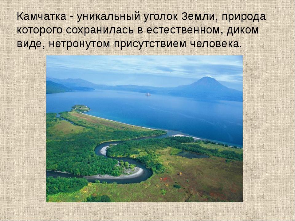 Камчатка - уникальный уголок Земли, природа которого сохранилась в естественн...