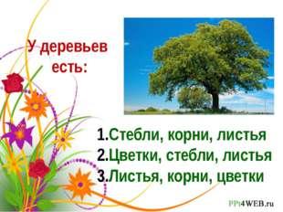 У деревьев есть: Стебли, корни, листья Цветки, стебли, листья Листья, корни,
