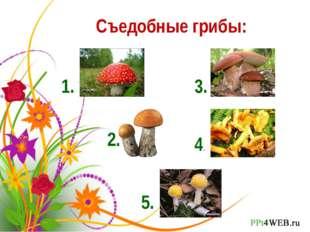 Съедобные грибы: 1. 2. 3. 4. 5.