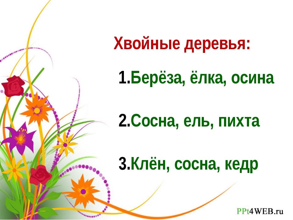 Хвойные деревья: Берёза, ёлка, осина Сосна, ель, пихта Клён, сосна, кедр