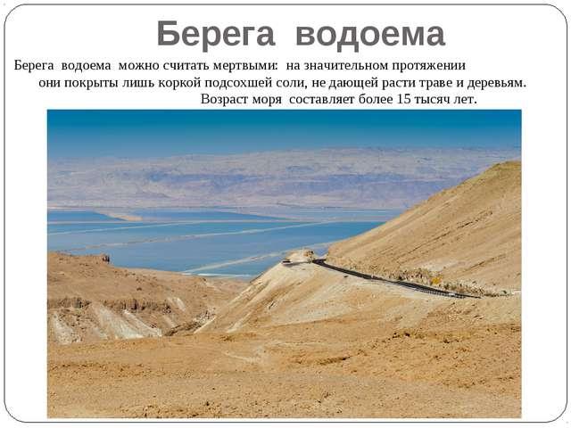 Берега водоема можно считать мертвыми: на значительном протяжении они покрыты...