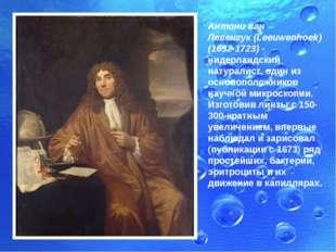 Антони ван Левенгук(Leeuwenhoek) (1632-1723) - нидерландский натуралист, оди