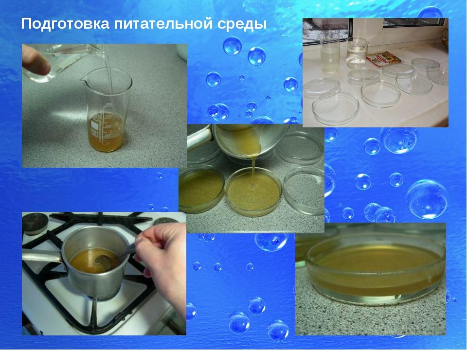 Питательные среды для бактерий в домашних условиях