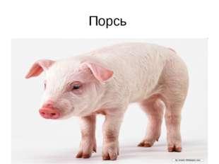 Порсь