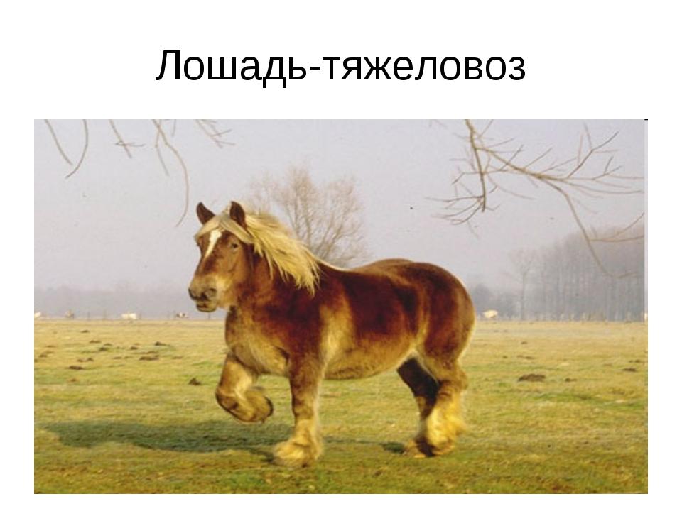 Лошадь-тяжеловоз