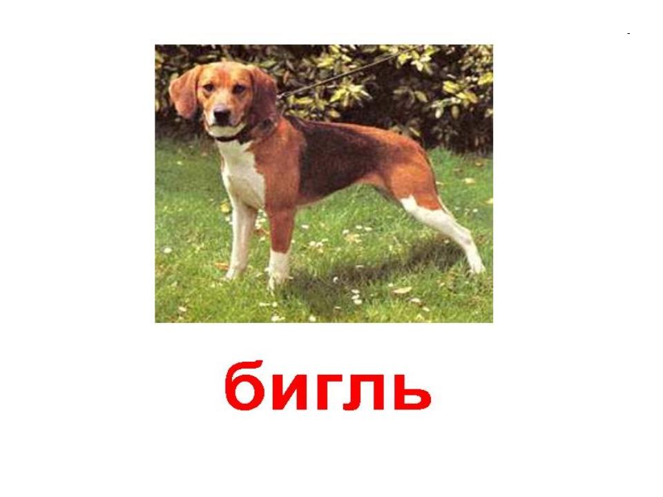Порода собак с картинками и надписями