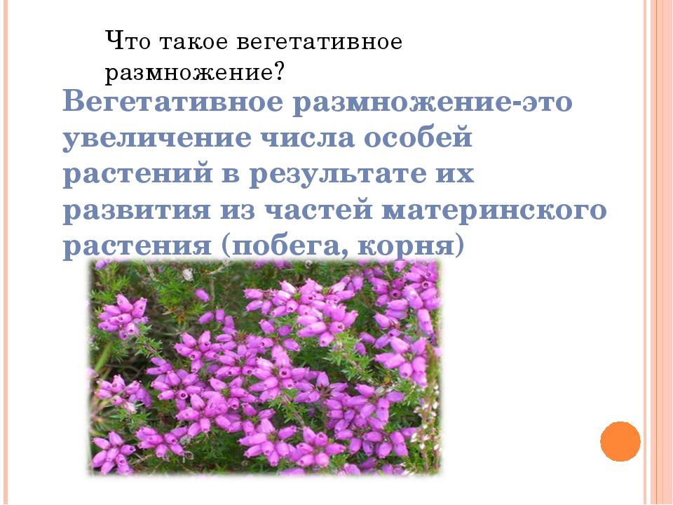 Что такое вегетативное размножение? Вегетативное размножение-это увеличение ч...
