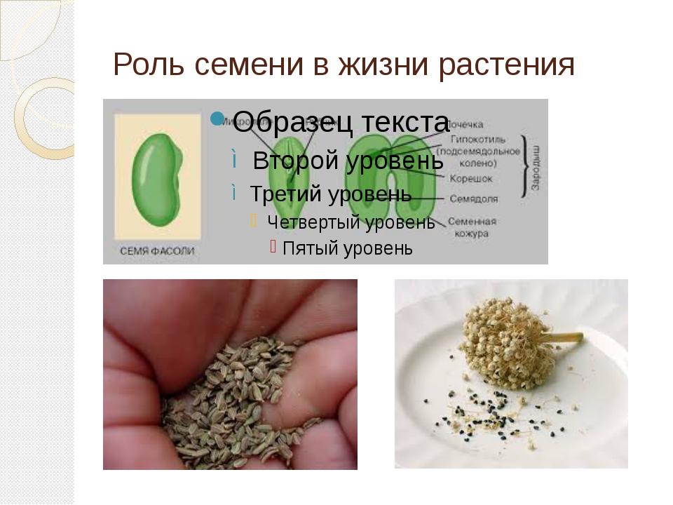 Роль семени в жизни растения