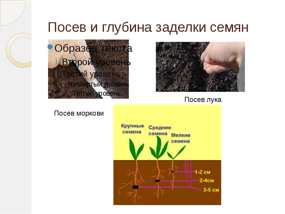 Посев и глубина заделки семян Посев моркови Посев лука