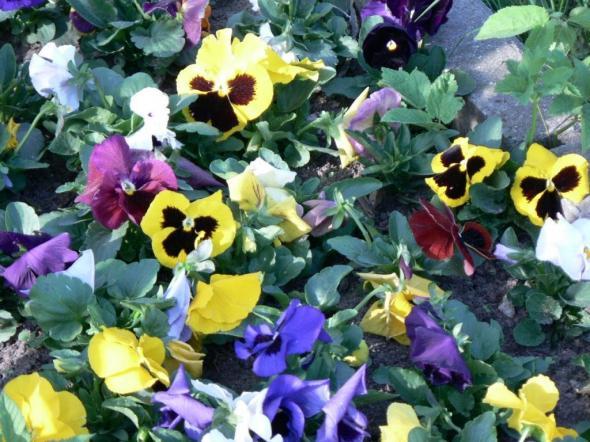 Легенды происхождения цветов