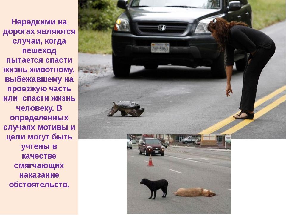 Нередкими на дорогах являются случаи, когда пешеход пытается спасти жизнь жи...