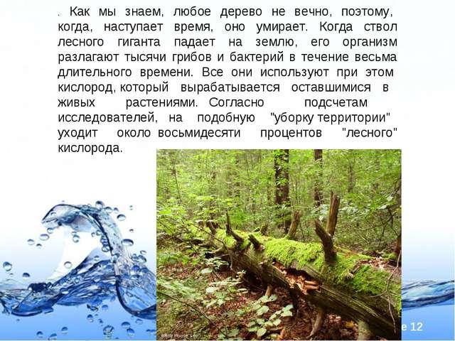. Как мы знаем, любое дерево не вечно, поэтому, когда, наступает время, оно у...
