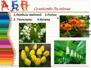 Семейство Лилейные 1.Ландыш майский 2.Лилии 3. Тюльпаны 4.Купена