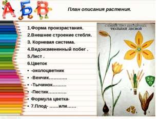 План описания растения. 1.Форма произрастания. 2.Внешнее строение стебля. 3.