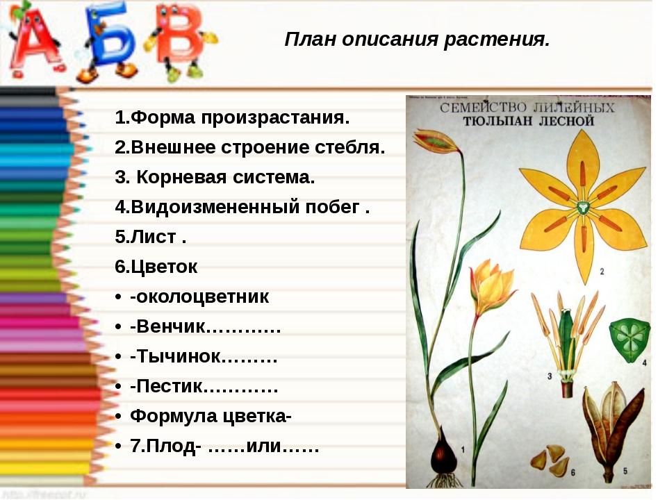 План описания растения. 1.Форма произрастания. 2.Внешнее строение стебля. 3....