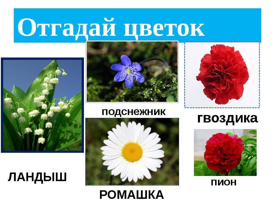 Картинки с изображением цветов одуванчик ромашка роза колокольчик ландыш