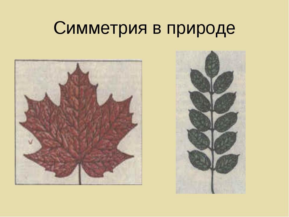 примеры симметрии в природе картинки для ряду