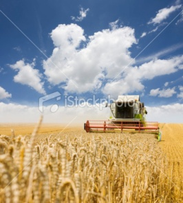 ist2_6794533-combine-working-on-a-wheat-field.jpg