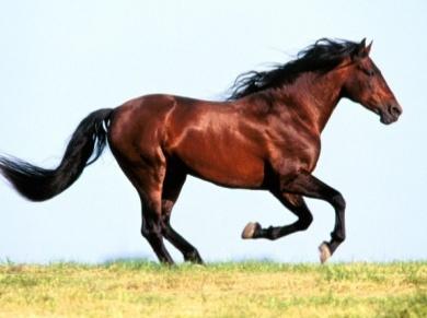 Animals_Horses__004308_.jpg
