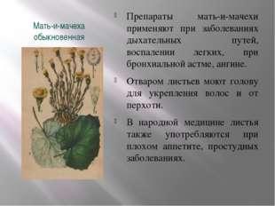 Мать-и-мачеха обыкновенная Препараты мать-и-мачехи применяют при заболеваниях