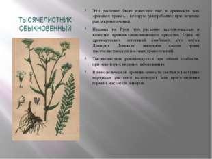 ТЫСЯЧЕЛИСТНИК ОБЫКНОВЕННЫЙ Это растение было известно ещё в древности как «ра