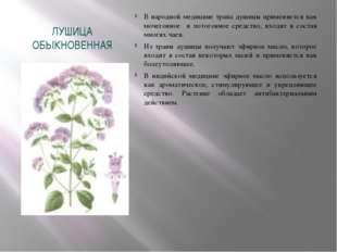 ЛУШИЦА ОБЫКНОВЕННАЯ В народной медицине трава душицы применяется как мочегонн