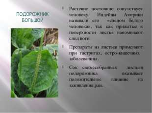 ПОДОРОЖНИК БОЛЬШОЙ Растение постоянно сопутствует человеку. Индейцы Америки н