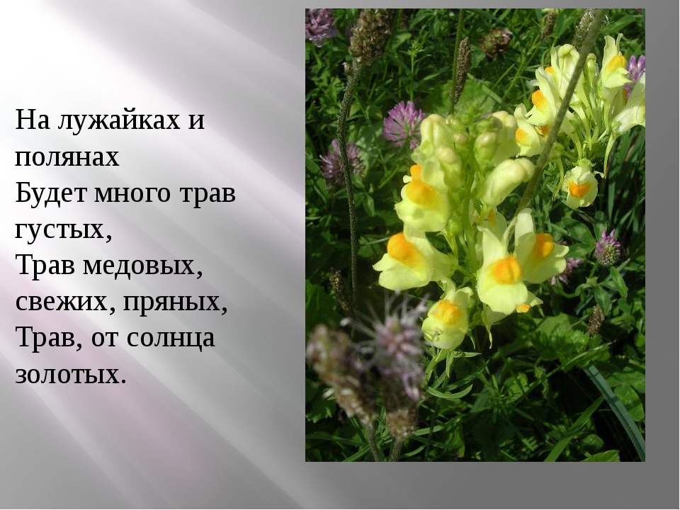 На лужайках и полянах Будет много трав густых, Трав медовых, свежих, пряных,...