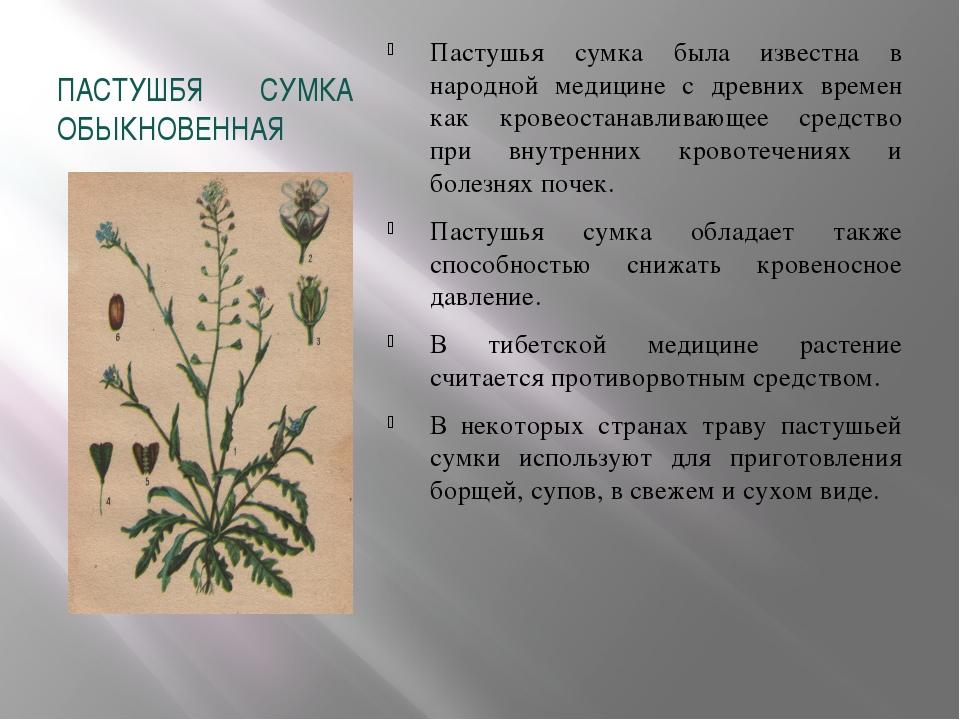 ПАСТУШБЯ СУМКА ОБЫКНОВЕННАЯ Пастушья сумка была известна в народной медицине...