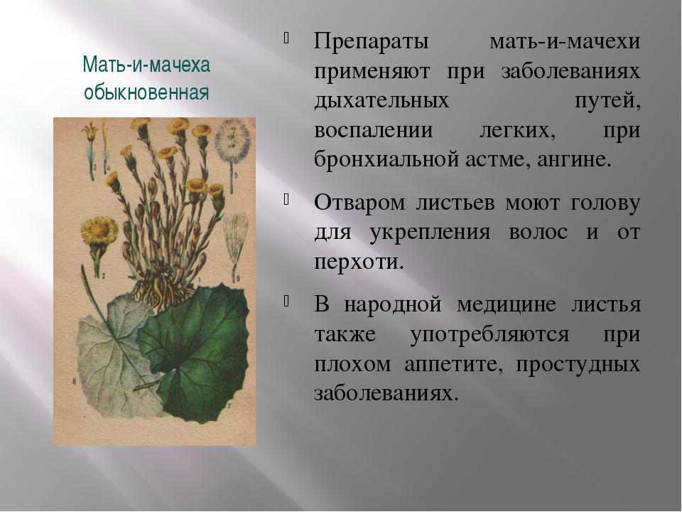 Мать-и-мачеха обыкновенная Препараты мать-и-мачехи применяют при заболеваниях...