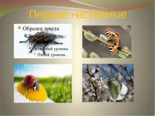 Первые насекомые