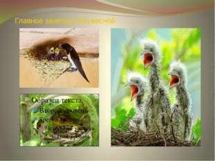Главное занятие птиц весной