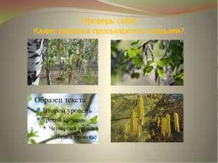 Проверь себя! Какие деревья просыпаются первыми?