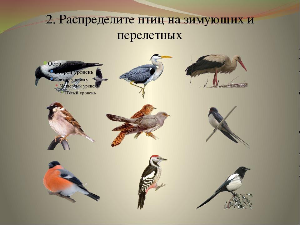 2. Распределите птиц на зимующих и перелетных