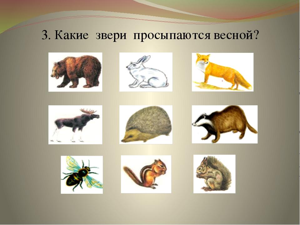 3. Какие звери просыпаются весной?
